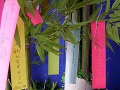 tanabata2009no5.JPG