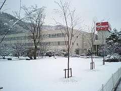 080121雪化粧1.jpg