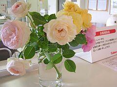 rose080606.jpg